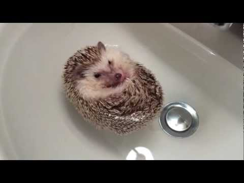 Hedgehog Boat